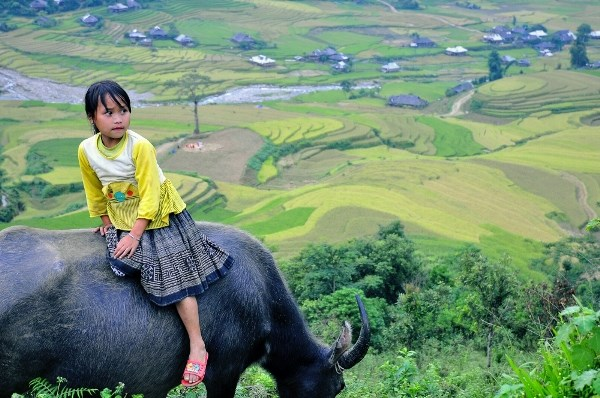 Tour Hanoi - Mu Cang Chai Photography Tour 4 days 3 nights